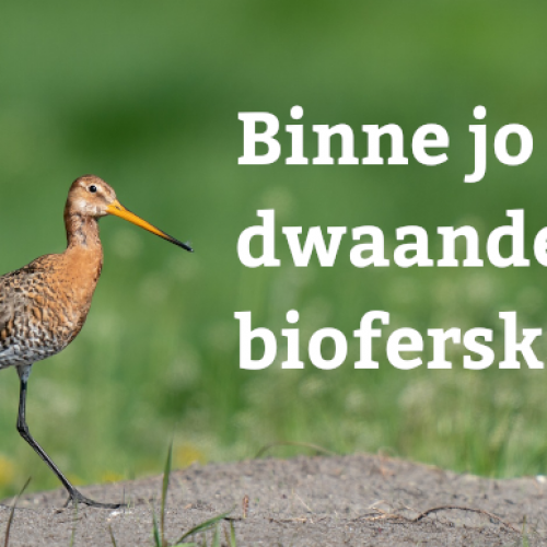 wommels.nl biodivers header